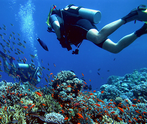 two people scuba diving in reef